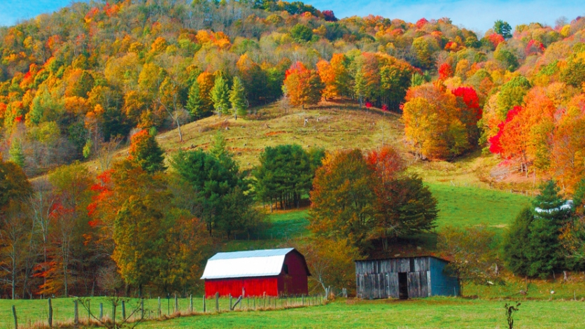 farm with red barn and beautiful fall trees and green grass