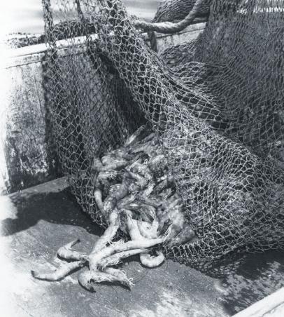 Shrimp Catch