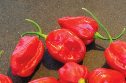 Tobago Peppers
